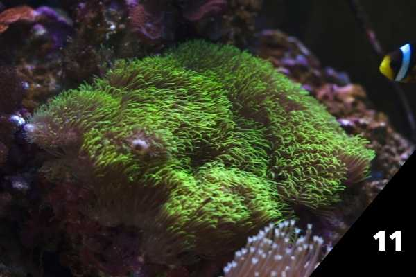 11 great low light corals